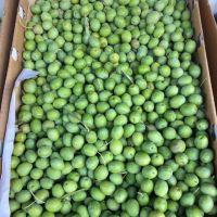 Organic Fresh Olives, Green, Black, Brown