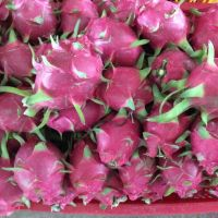 FRESH DRAGON FRUIT HIGH QUALITY WITH BEST PRICE