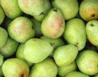 Quality Fresh Fruit Sweet Nutrition Pear