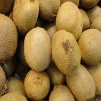 Wholesale Fresh Kiwi / Kiwi Fruit For Sale / Good Price Quality Fresh Kiwi Fruits