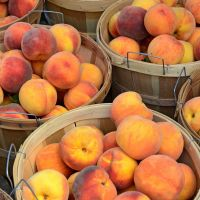 South African Fresh Peaches for export./ Fresh Peaches / Fresh Nectarines Class 1 (Cat 1) Premium Quality for sale