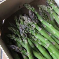 Fresh Asparagus High Quality From Africa