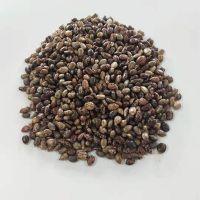 High Quality Castor Seeds for Making Oil