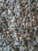 Premium Quality Cotton Seeds and Cotton Seeds Oil