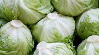 Fresh Lettuce Iceberg