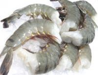 Quality King Prawns , White Shrimps , Black Tiger Shrimps Available