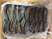 Tilapia, Tilapia fish dried, fresh or frozen