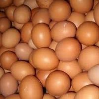 Fresh chicken brown and white eggs