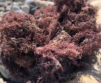 Wildcrafted Sea Moss / Dried Sea Moss Purple - Larry Vo (Whatsapp/Line/Viber/Ka