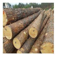 Pine round logs / pine wood / Pine wood price