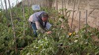 Hot selling best vegetable seeds Solanum melongena seeds planting