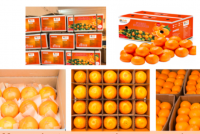 Fresh fruit delicious oranges for sale Fresh Navel Orange