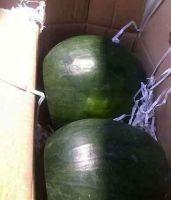 Minh Phuong Vietnam High Quality Fresh Water Melon Fruit