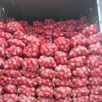 Nashik Premium Quality Dry Onion fresh from Farm