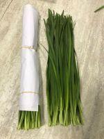 Fresh onion flower