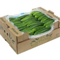 Top Quality Fresh Cucumber From Ukraine Wholesale