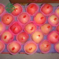 Granny Smith Apple Autumn