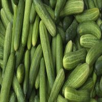 Fresh Cucumber/ Fresh vegetable cucumber