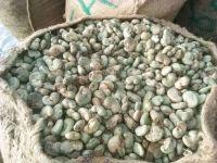 HIGH QUALITY BENIN  CASHEW NUT IN SHELL