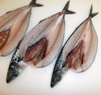 Frozen Atlantic Mackerel Fish Scomber Scombrus