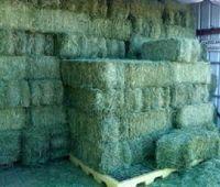Lucerne Hay, Alfalfa Hay Bale, Clover from Sweden