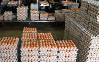 Farm Fresh Chicken Table Eggs Brown and White Shell Chicken