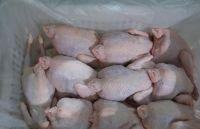 Wholesale Chickens Frozen HACCP HALAL Frozen Whole Chicken