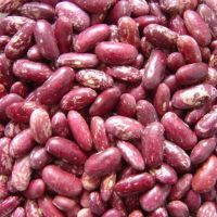 Light Speckles  Kidney Beans