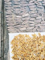 Dried sea cucumber (bat susu, white teatfish)