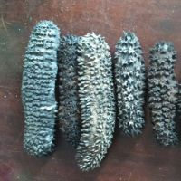Dried Sea Cucumber Cheap High quality