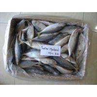 Indian Mackerel Processor