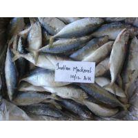 Organic Frozen Seafood Indian Mackerel Fish