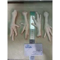 Processed Frozen Chicken Feet Paws