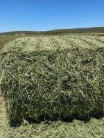 Alfalfa Lucerne Hay