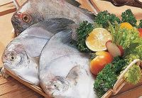 FRESH AND FROZEN SEA WATER FISH FOR SALE