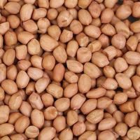 MC Grade Raw Peanuts Kernel Bold Groundnut Wholesale