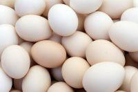 WHITE EGGS FOR SALE
