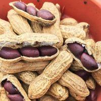 Black Peanuts for sale
