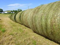 Alfalfa Hay, Rhodes Grass, Oats Hay Ready / Oats Hay Animal Feed for Sale