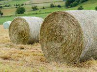 Alfalfa Hay, Rhodes Grass, Oats Hay Ready / Oats Hay Animal Feed for Sale