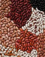 High Quality Black,Red,White Kidney Beans 2019 Crop Year