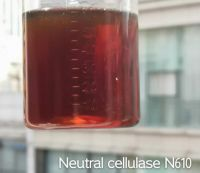 enzyme Food additives
