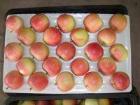 fresh royal fruit gala apple