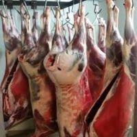 Halal Frozen Venison Carcass