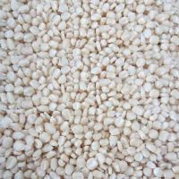 Best Grade White Corn Maize For Animal Feed White Maize Corn