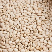High Quality Lima Beans  For Sale at great rates