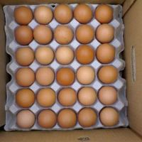 Chicken Origin and Egg Product Type broiler chicken eggs for sale