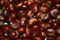 Fresh new chestnuts for sale with low price buy bulk horse chestnuts