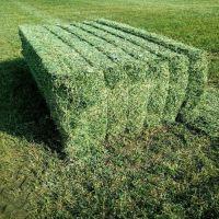 Alfalfa Hay Bales 250KG