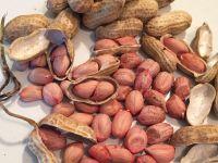 Peanut ,Dried Kernel Peanuts Groundnut for sale
